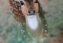 deer my deer