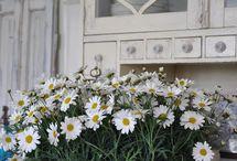 Blomme - decor