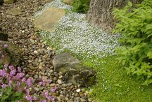 Our Work:  Groundcovers / Groundcovers in the Landscape
