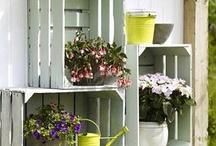 Deco para plantas