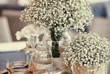 Gypsophila wedding