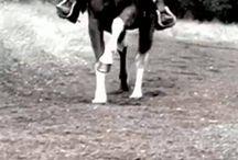 Horses & Animals