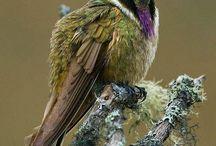 Beautiful Bird's ™