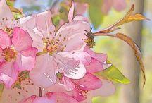 Watercolor / Акварель и уроки