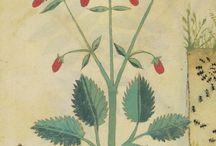 Roślinne motywy