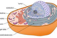 Elämä ja evoluutio / Yläkoulun biologian opetukseen sopivia ideoita