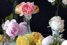 Rosas / by José Langella
