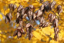 autumn herfst ősz hungary