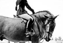 Horses, horses, horses  / If I need to explain .... Well  / by Julia Grindstaff
