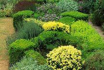 I love hedges / Hedges