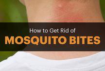 bites mosquitos