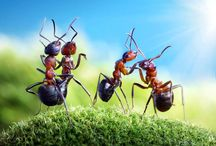 Pest Control Tips / Get tips on pest control.