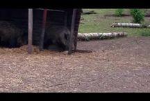 dierentuinen