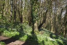 Woods in Mitcheldean / Some lovely woodland walks in Mitcheldean