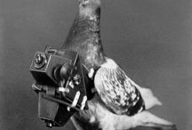 psych-O-drone #stopthePigeon