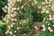 giardini -  balconi fioriti - fiori - prati - staccionate...........