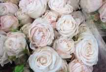 Flowers for C & J / August blush coloured wedding flowers for C&J.