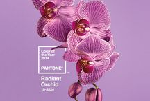 Radiant Orchid / Pantone color of the year
