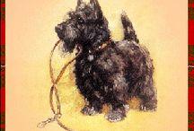 Scottish terrier / Collar