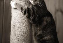 talking cats / by Nancy Vogelpohl