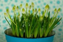 All about Garden / by Rosangela E.