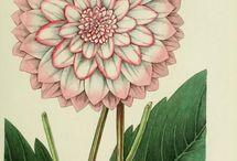 """flores / Botanical animation """"Story of Flowers"""" Azuma Makoto, Katie Scott"""