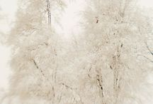 photograph::winter / by Alecia Talbot