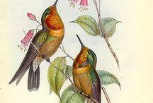 pájaritos