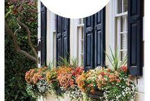 Gardening  - window boxes etc