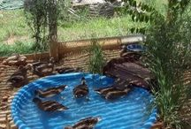 Easy clean duck pond