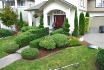 Trimming trees and shrubs