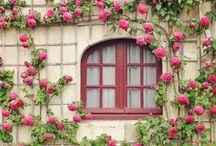 Flower Garden / by Dodie Dee