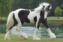 Gypsy Horses / by Ace Bell