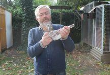 Dirk van Bulck galambok