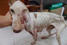 animal abandonner et blesser et maltreter