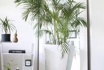 Design, Plants