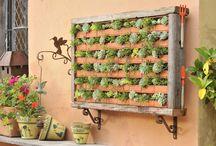 Gardening | Outdoor & Indoor / by Patrícia Kitamura