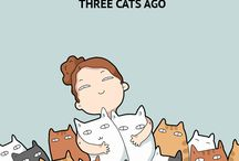 gatos mais gatos