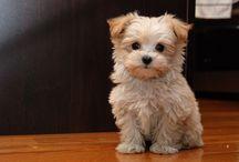 Hypoallergenic pup ideas