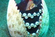 Cute Sea Animals / All types of sea animals being cuties