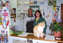 VETERINARY MEDICINE WORK EXPERIENCE INTERNSHIP IN CAPE TOWN / South Africa is modern and energetic, the perfect place to gain experience in a delightful small veterinary practice in Cape Town, under the supervision of an excellent vet who will endeavour to give you as much knowledge and experience as possible / by Travellers Worldwide
