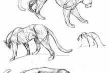 Animals - sketch