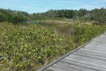 Florida / Places to see in Florida  / by Brianna Kwasnik