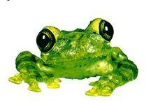 Frogstomp / by Julia Mêendiz