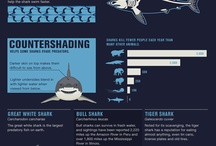 Everything Sharks