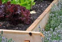 inspiration  |  vege garden