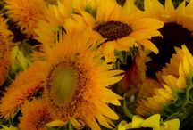 Late summer flowers / Examples of flowers that should be available in late summer.