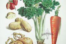 grafika warzywa