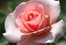 Flower fixation