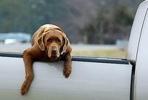 The Dog Whisperer!